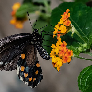 20180808 097 Philadelphia Insectarium and Butterfly Pavilion