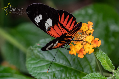 20180808 111 Philadelphia Insectarium and Butterfly Pavilion