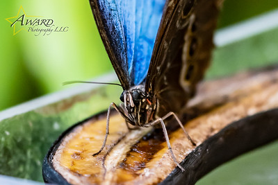 20180808 131 Philadelphia Insectarium and Butterfly Pavilion