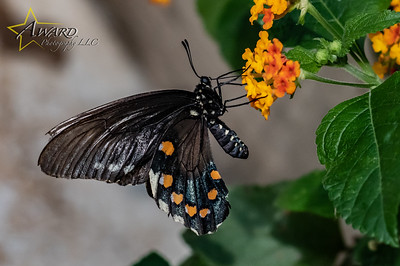 20180808 095 Philadelphia Insectarium and Butterfly Pavilion