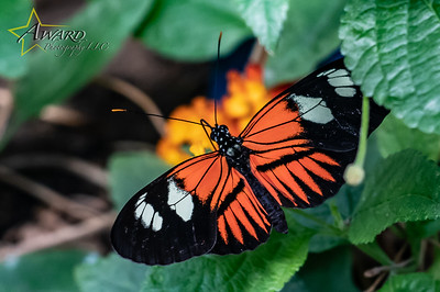20180808 113 Philadelphia Insectarium and Butterfly Pavilion