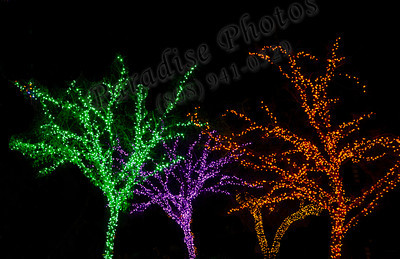 Green purple orange lighted trees zoo2035