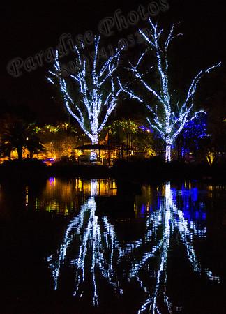 white lights tree reflection 2127