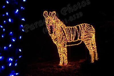lighted zebra 2068
