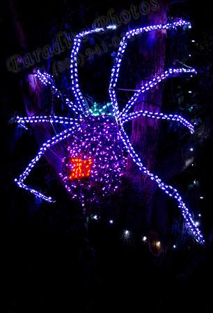Spider in lights 2144