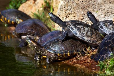 TurtlesB012211