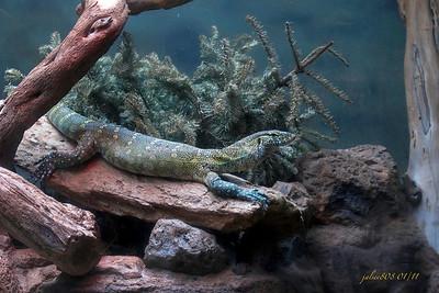 Lizard012211