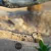 2010 July 24 Desert Museum photowalk-1337