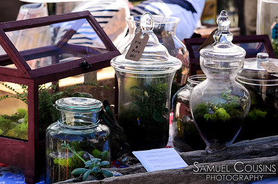 Terrariums in glass jars for sale at Picnic.
