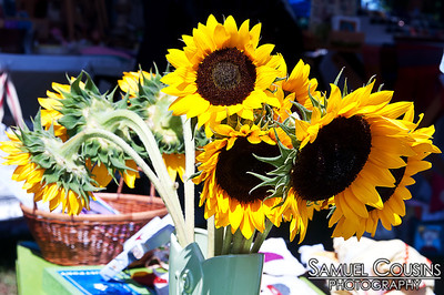 Sunflowers for sale at the Picnic Festival