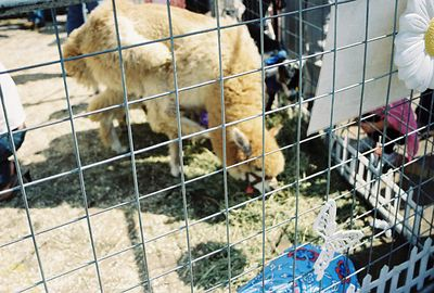 10/10/04 Petting zoo at Pier del Sol 2004