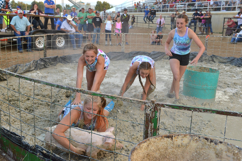 Justin Sheely | The Sheridan Press<br /> Layla Reimers grapples with the pig as teammates, from left, Tyalor Bower, Riley Bunting and Sydni Bilyeu move in during Pig Wrestling at the Sheridan County Fairgrounds Saturday, July 28, 2018.