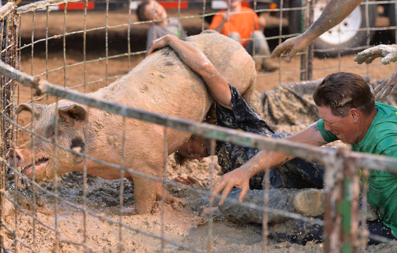 Justin Sheely | The Sheridan Press<br /> The team from Koltiska Distillery drops their pig during Pig Wrestling at the Sheridan County Fairgrounds Saturday, July 28, 2018.