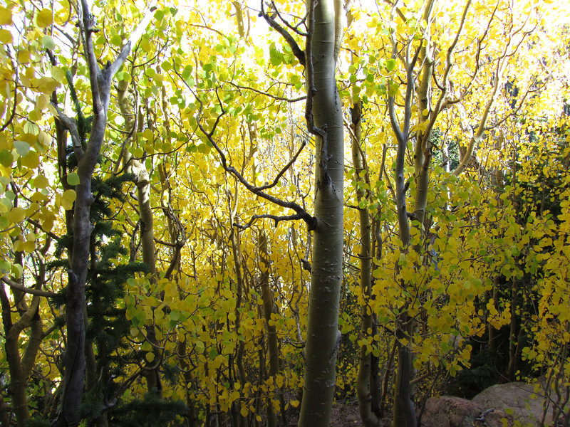 2010Sept18PikesPeakHike 099