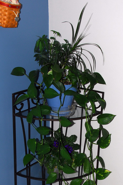 201006_Planter_005_out