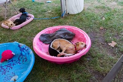Dogs. Bay Area Pet Fair 2017 - Alameda County Fairgrounds - Pleasanton, CA, USA