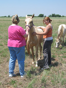 Hedgehog Gathering at PogStar Hedgehogs (06/2005)  Horse Photos  Filename reference: 20050620-032310-HAH-PogStar_Gathering