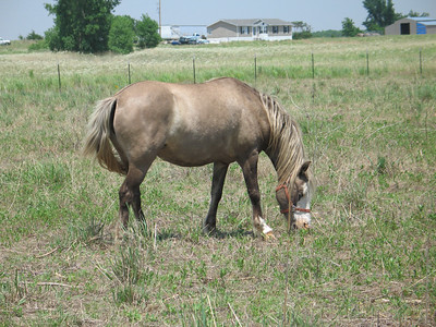 Hedgehog Gathering at PogStar Hedgehogs (06/2005)  Horse Photos  Filename reference: 20050620-032200-HAH-PogStar_Gathering