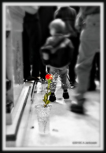 ...just one rose is left ...to remember...