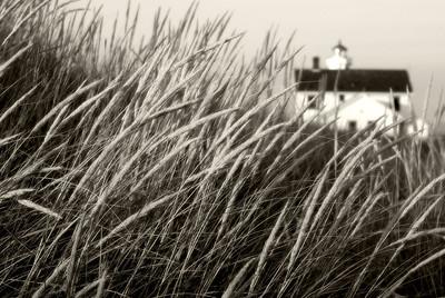 Point Wilson Grass