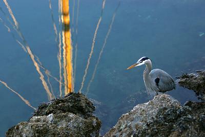 Hudson Point wildlife