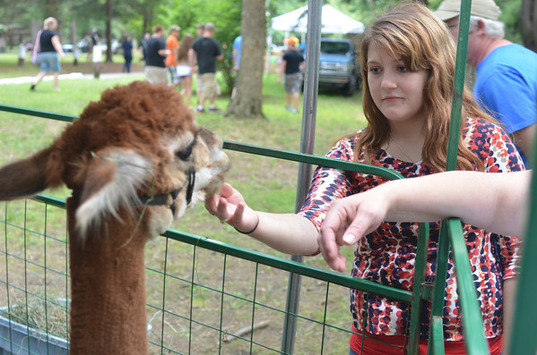 This was the first year Lilly Mountain Alpacas of Lilly, Pa. joined the Portage Area Summerfest, bringing an alpaca petting zoo Saturday to Crichton McCormick Park.