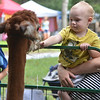 Nicholi Norris of Portage marvels at the Lilly Mountain Alpacas petting zoo with mother, Ashley. It is the first year the Lilly-based alpaca farm joined Summerfest.