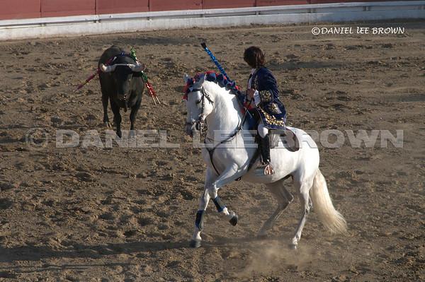 Portuguese Bullfight in Stevinson, CA