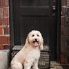 Doggies-0234