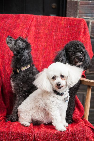 Doggies-9895