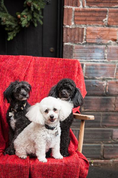 Doggies-9900