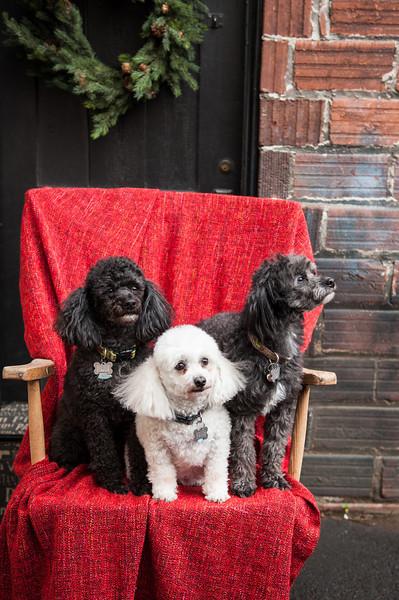 Doggies-9908