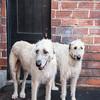 Doggies-0525