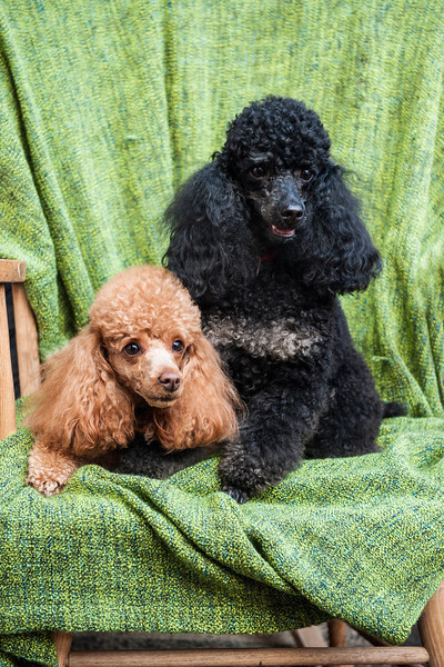 Doggies-0452