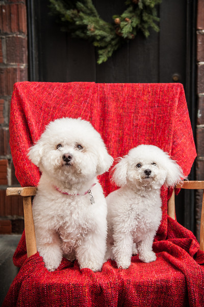 Doggies-9979