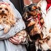 Doggies-0312