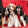Doggies-0258