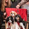 Doggies-0254