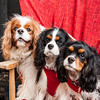 Doggies-0285