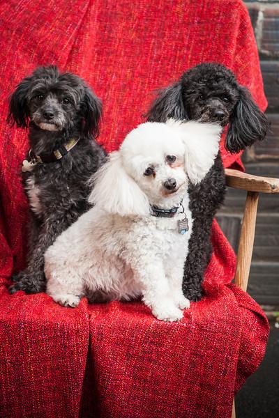 Doggies-9896