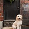 Doggies-0239