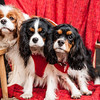 Doggies-0290