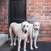 Doggies-0524
