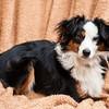 Doggies-0216