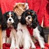 Doggies-0257