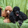 Doggies-0482