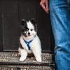 Doggies-0159