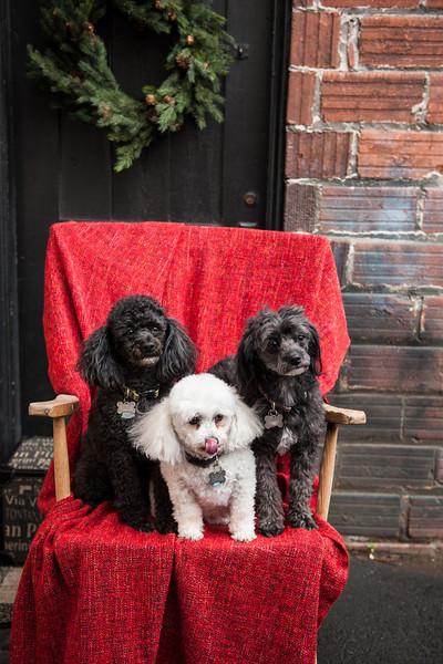 Doggies-9907