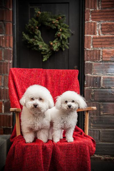 Doggies-9973
