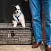 Doggies-0156